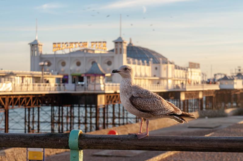 Sprachaufenthalt England, Brighton - Royal Pier