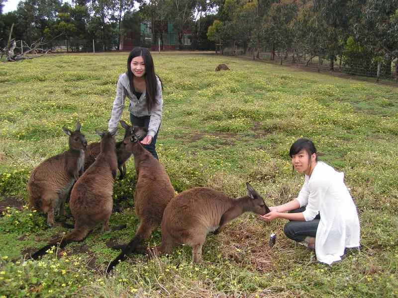 Séjour linguistique Australie, Adelaide - SACE Adelaide - Étudiants