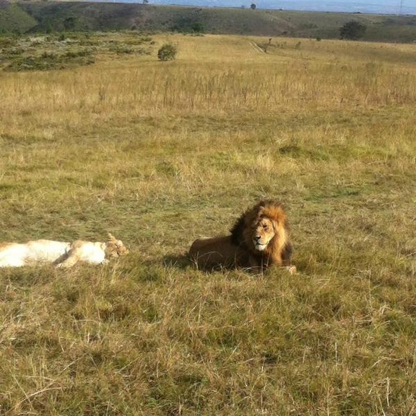 Sprachaufenthalt Südafrika, Kapstadt - EC Kapstadt - Safari