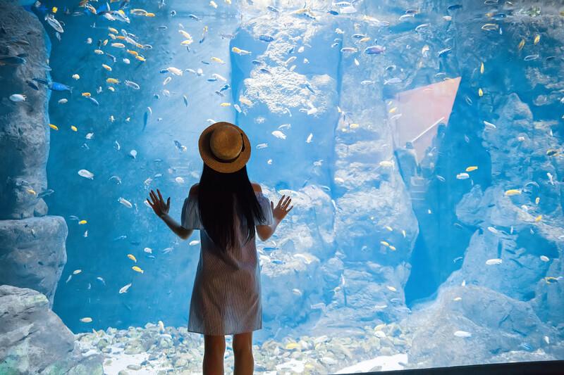 Sprachaufenthalt Frankreich, Biarritz - Aquarium