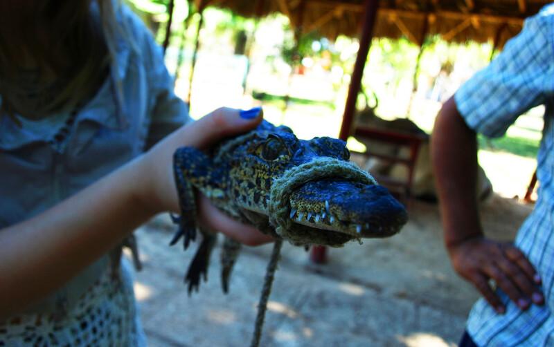 Sprachaufenthalt Mexiko, Playa del Carmen - Ökopark Crococun