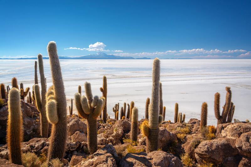 Séjour linguistique Bolivie, Désert de sel