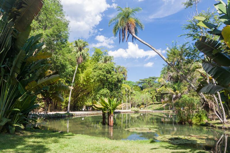 Botanical garden in Rio de Janeiro, Brazil.