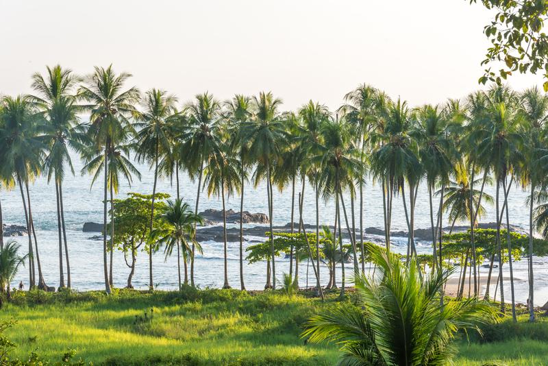 Séjour linguistique Costa Rica, Palmiers