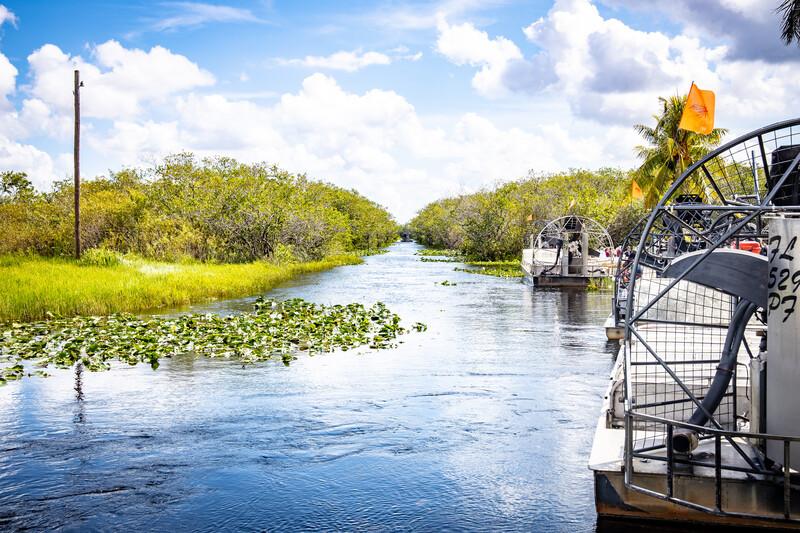 Sprachaufenthalt USA, Miami - Everglades