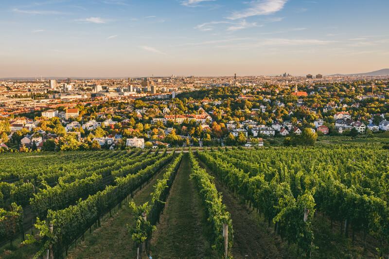 Séjour linguistique Austria, Vienna - Nussdorf - Vignobles