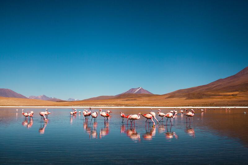 Séjour linguistique Bolivie, Flamants roses