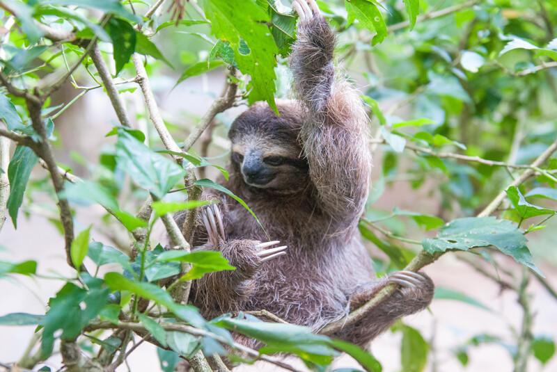 Sprachaufenthalt Costa Rica, Puerto Viejo de Talamanca - Jaguar Rescue Center