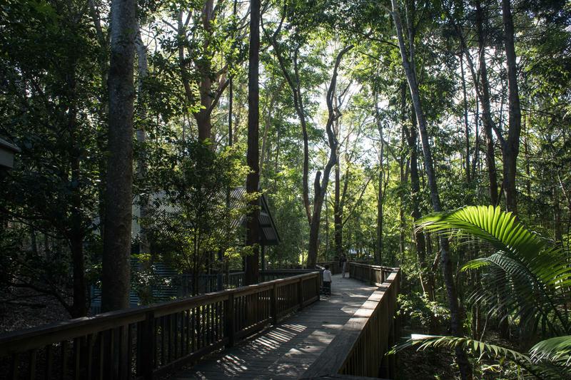 Séjour linguistique Australie, Sunshine Coast - Jungle