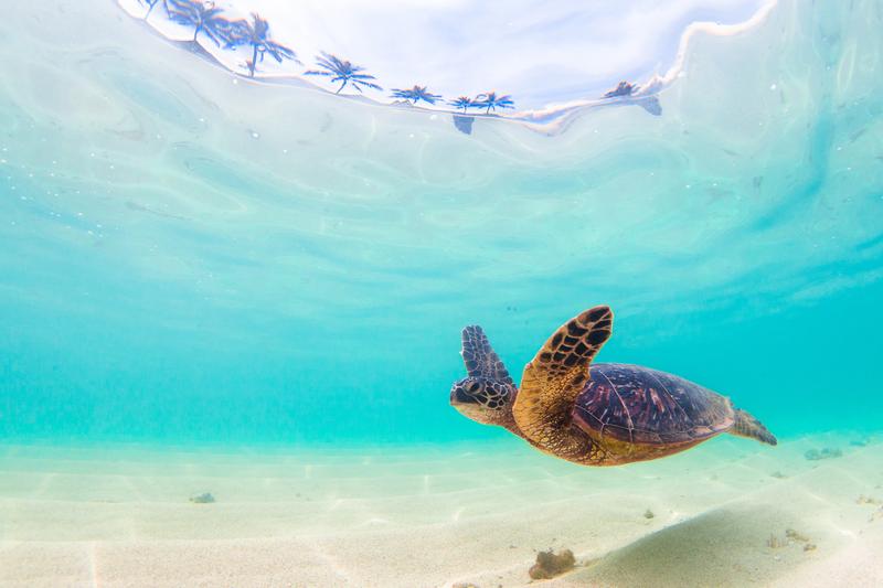 Sprachaufenthalt Costa Rica, Playa Tamarindo - Rettung Meeresschildkröte
