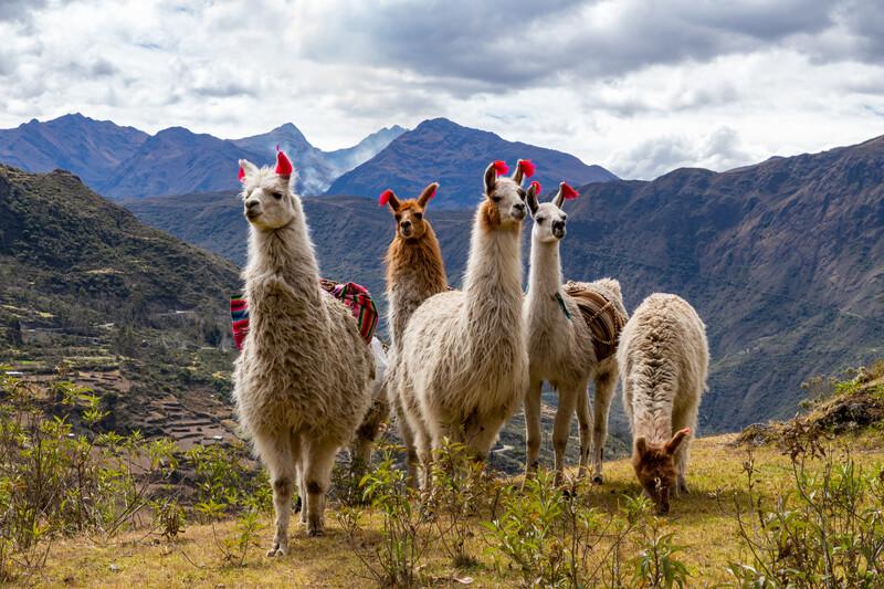Séjour linguistique Pérou, Cuzco - Trekking