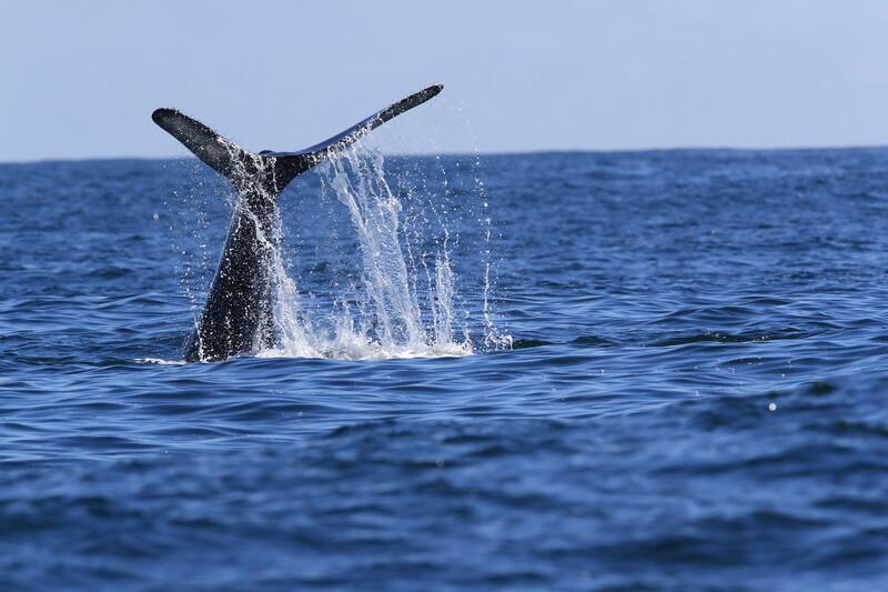 Sprachaufenthalt Kanada, Vicotria - Whale Watching