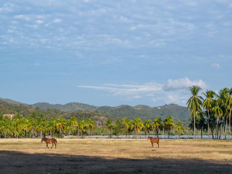 Séjour linguistique Costa Rica, Samara - Chevaux