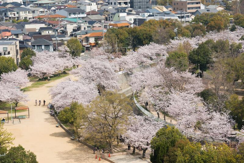 Sprachaufenthalt Japan, Kobe - Hanami