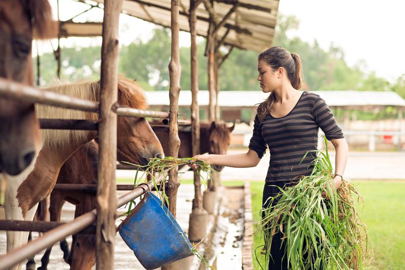 Boa Lingua, Séjour Linguistique - Farmstay