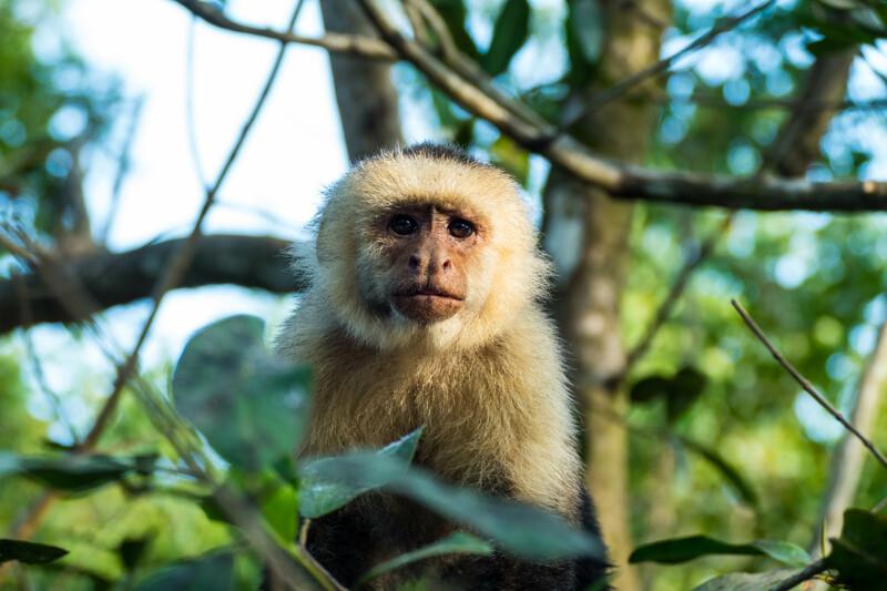 Sprachaufenthalt Costa Rica, Manuel Antonio