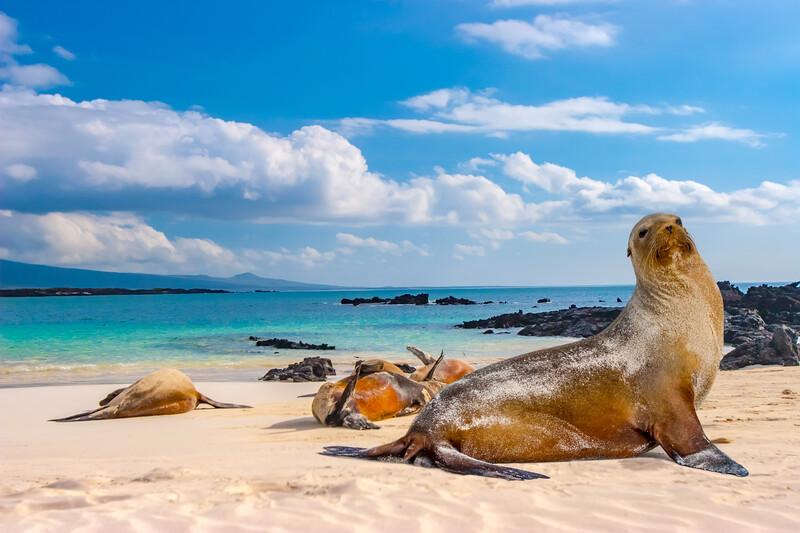 Séjour linguistique Équateur, Galapagos