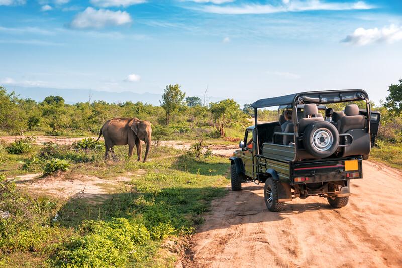 Sprachaufenthalt , Kapstadt - Safari Tour