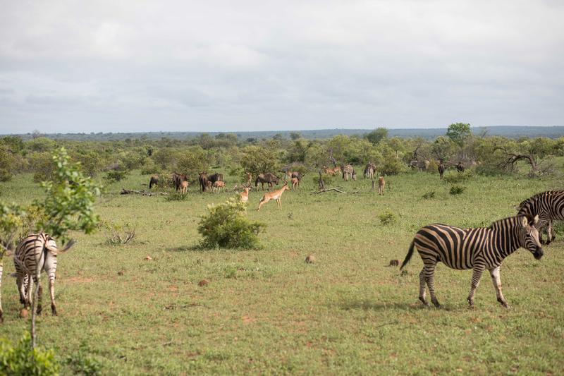 Séjour linguistique Afrique du Sud, Safari