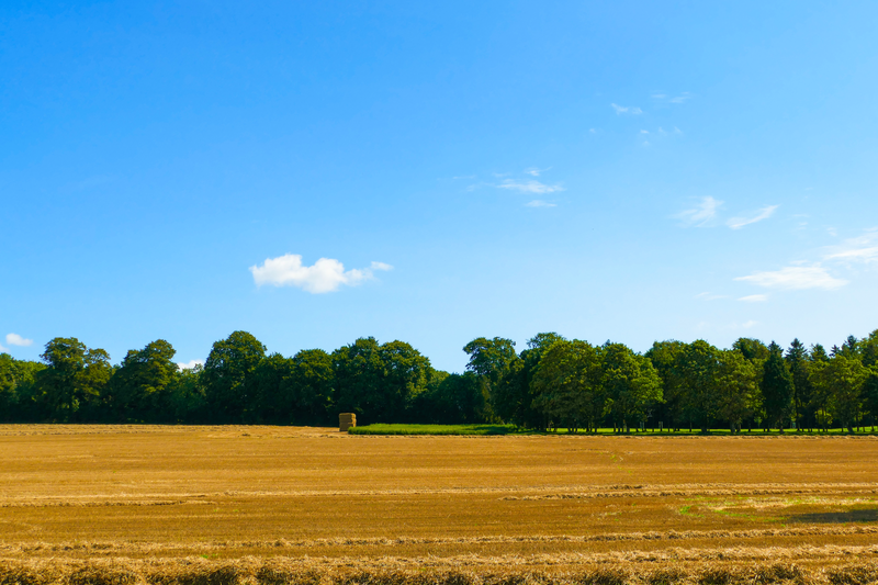 sprachaufenthalt england eastbourne kingley vale
