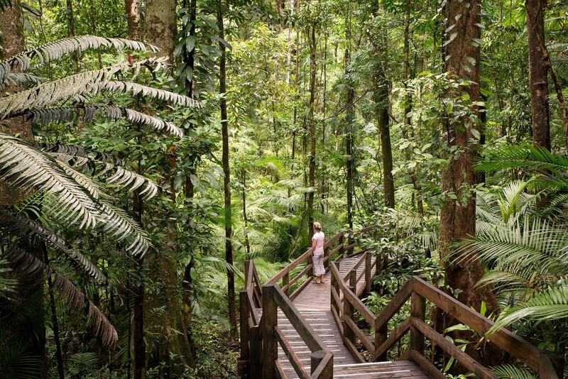 Séjour linguistique Australie, Cairns - Daintree National Park