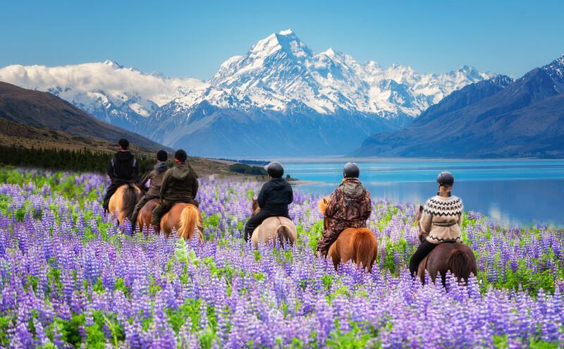 Séjour linguistique Nouvelle-Zélande, Équitation