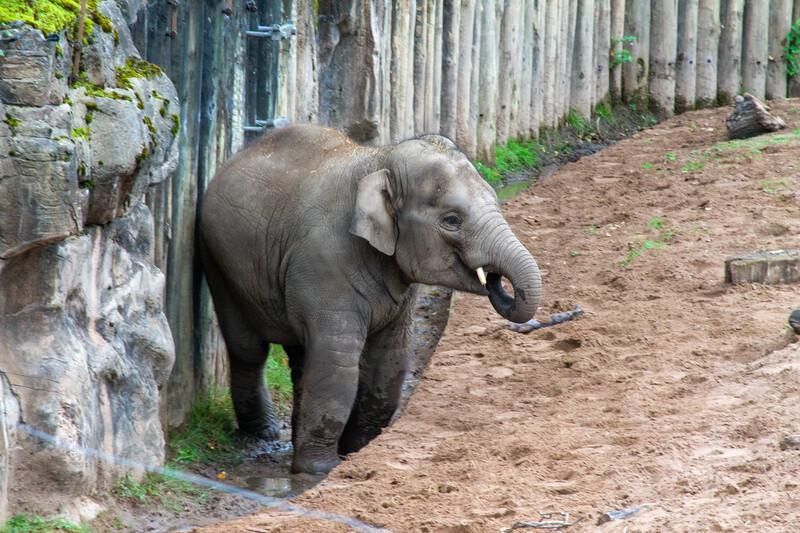 Séjour linguistique Angleterre, Paignton - Zoo