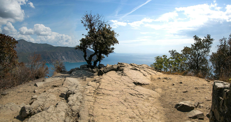 nice view for this lonely tree on the promontory