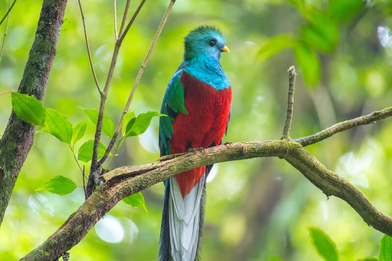 Séjour linguistique Panama, Oiseau